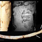 صورة 1 : منظر لموقع مغارة وحيدي القرن مكان اكتشاف العظام التي تحتفظ بآثار الجزارة (مقلع أولاد حميدة 1، الدارالبيضاء). © جون بول راينال